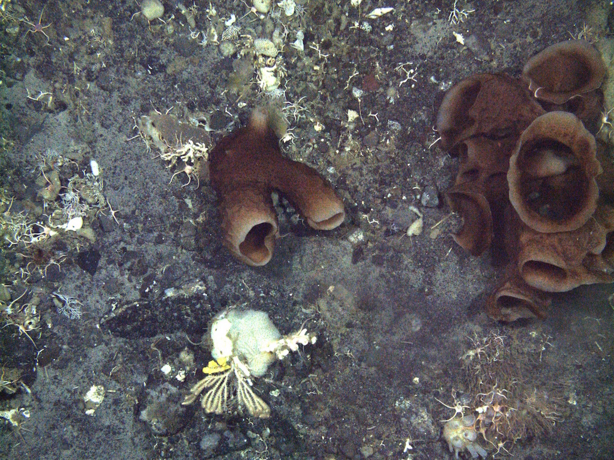 Sponges on the sea floor