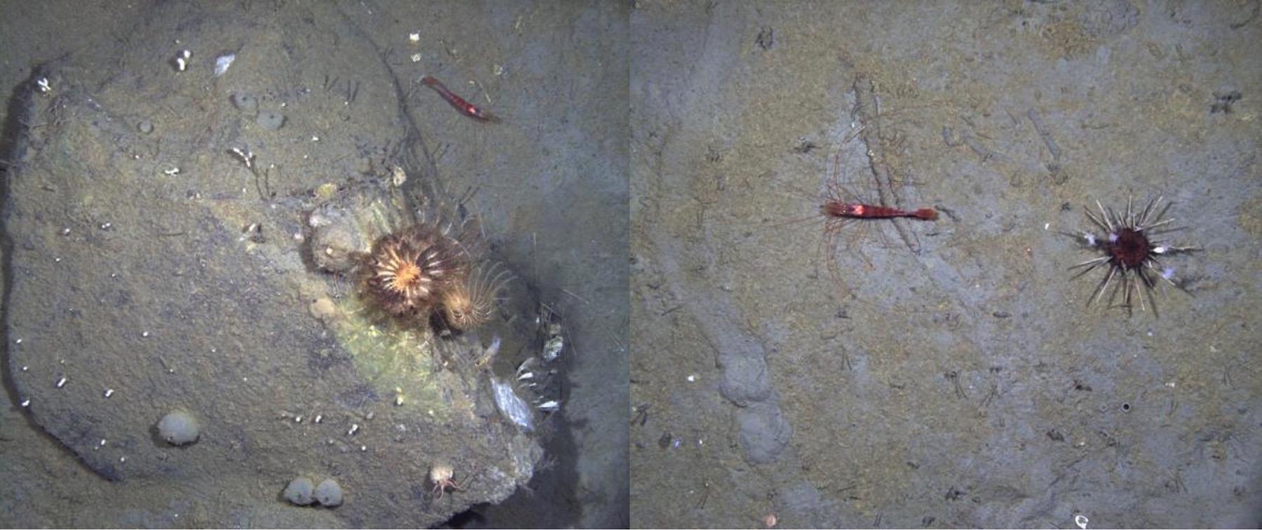 Antarctic sea floor images