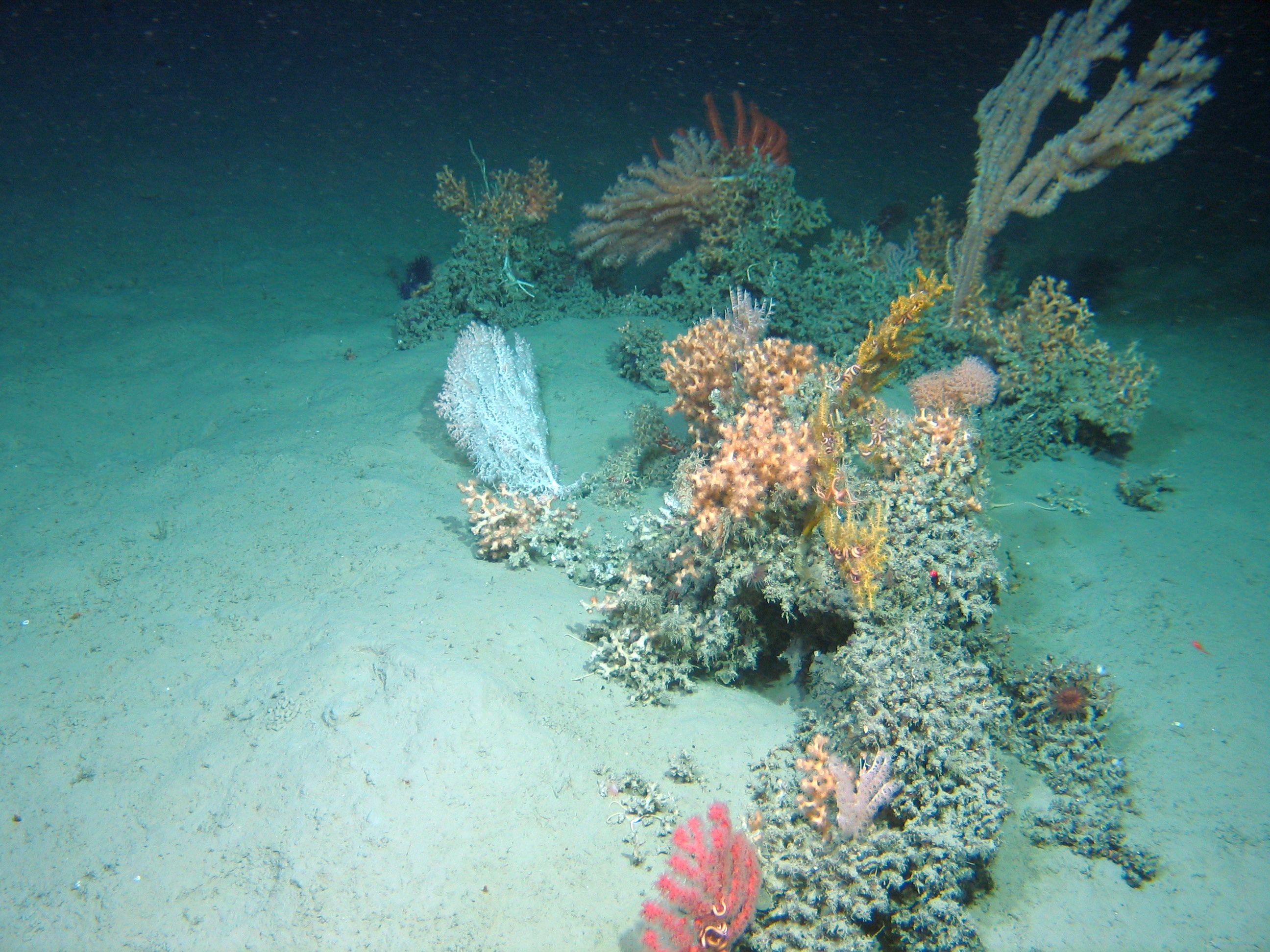 Irish deep-sea cold water corals
