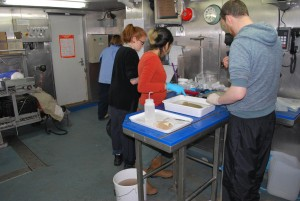 The team sorting specimens in the wet lab of RV Celtic Explorer